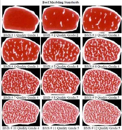 Usda beef grades chart